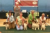 WSSCSW Open Show 14/07/19 - Winners Gallery
